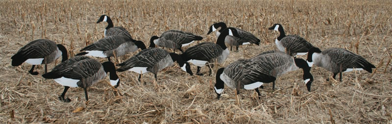 Canada Goose hats online shop - Real Geese Decoys Canada Silhouettes